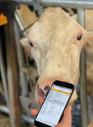 O programa permite acceder a tódolos datos desde o móbil.