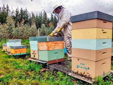 Convocadas as axudas para produción e comercialización de mel