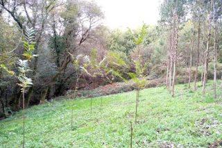 Xestión da biodiversidade no monte: propostas para unha ordenación razonable (I)