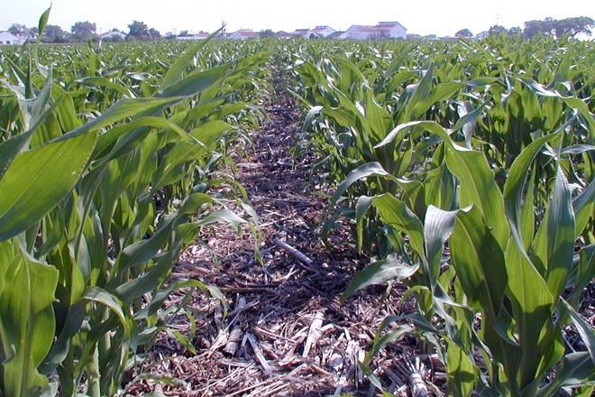 Apoio á inclusión da sementeira directa nos ecoesquemas da PAC