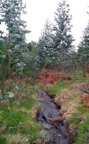 Plantación irregular na cabeceira dun río.