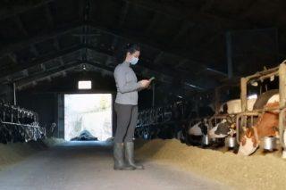 Nova ferramenta de xestión para rabaños pequenos de vacún de leite: UNIFORM-Repro Pocket