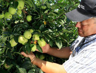 Agromaster, un fertilizante para garantir a nutrición e crecemento uniforme de froiteiras e cultivos leñosos