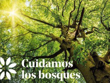 """PEFC lanza a campaña """"Coidamos os bosques"""" para celebrar o Día Internacional dos Bosques"""