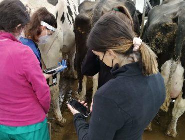 Máis de 500 alumnos do Campus Terra de Lugo farán prácticas na Granxa Experimental de Vacún de Leite