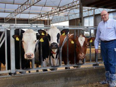 Un estudo con 3.500 vacas leiteiras demostra que os animais híbridos son máis rendibles nas ganderías