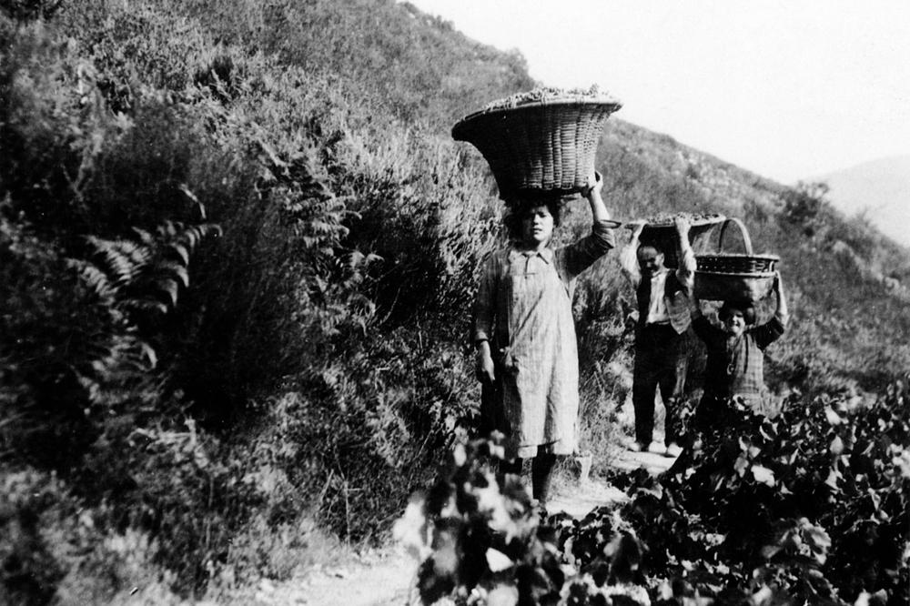 Vendima en Coea nos anos 30 do século pasado / Arquivo Ebeling