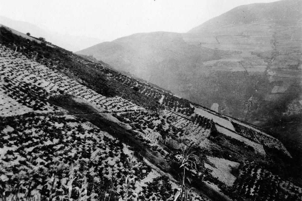Foto dos anos 30, coas ladeiras de Coea ateigadas de viñedos onde se chegaban a recoller 90.000 quilos de uva / Arquivo Ebeling