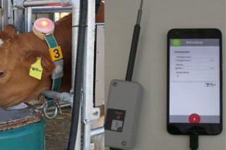 ¿Pode ser o big data un aliado para aumentar a rendibilidade das ganderías leiteiras?