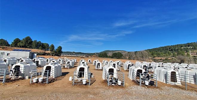 centro recria Cowvet (Valencia)2
