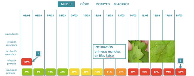 infecions-e-incubacions-primarias-de-mildio-en-Rias-Baixas-