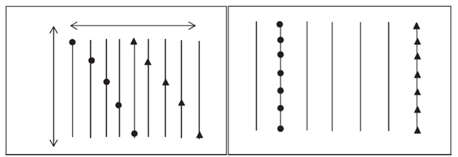 marco-de-plantacion-abela