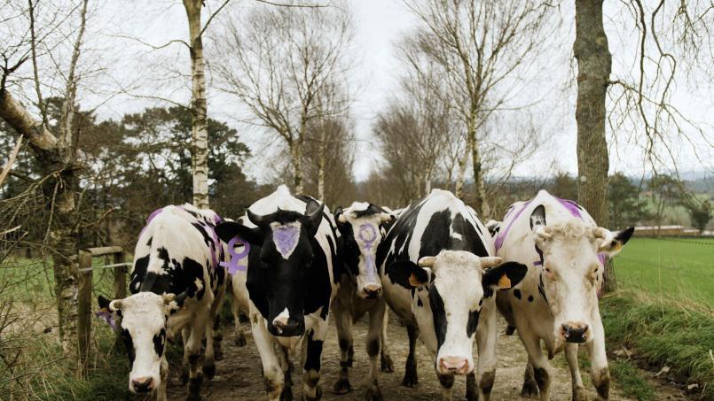 As vacas de Xanceda maniféstanse por todas as muUulleres