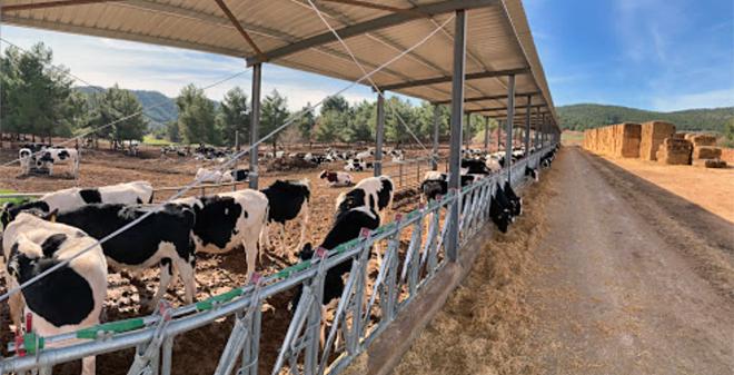 xovencas centro recria Cowvet (Valencia)1