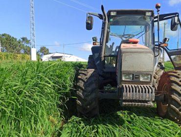 Xornada sobre pasto siambasa: Manexo do cultivo e experiencias no norte de España