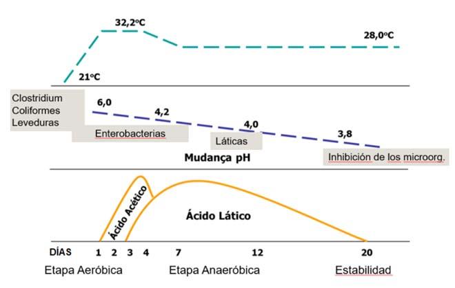 Explicación da fermentación e da dinámica de factores que afectan á calidade da forraxe.