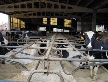 O estudo de custos de produción das granxas de leite dilúese na indefinición