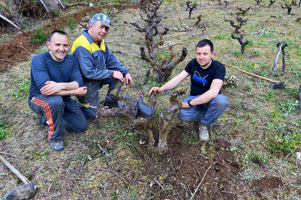Héctor e José xunto a José María, o seu pai, nunha das viñas que teñen en Coea, en Navia de Suarna