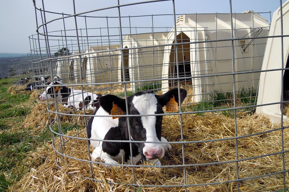 Un novo estudo ratifica a vacina de MSD Animal contra a diarrea neonatal como a máis completa