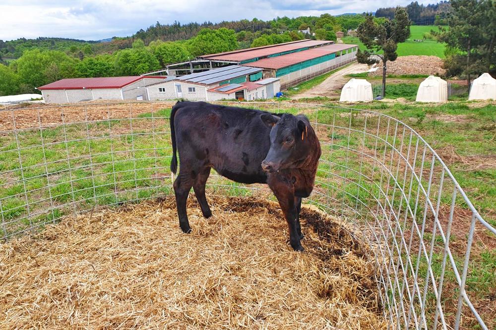 Pretenden reunificar a recría e reubicar as vacas secas para traballar máis cómodos