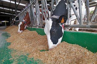 Webinar de ABEMBE sobre manexo da vaca en transición