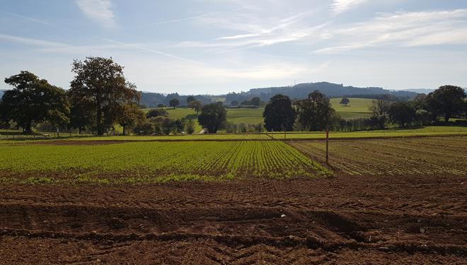 Siembra-de-cultivos-invierno-CIAM-