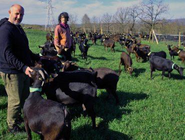 Touza Vella, pioneiros do queixo de cabra en Galicia