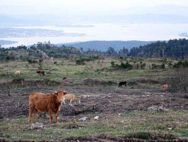 Coñecer a xestión comunal do pasado para inspirar o rural futuro