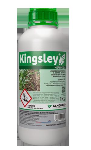 kingsley vertical