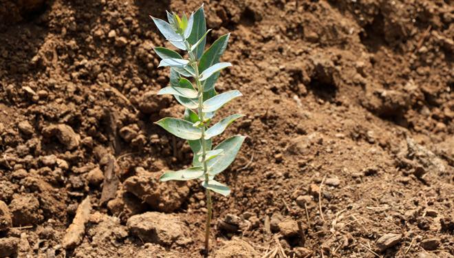 Agroblen Tablet, a nova gama de fertilizantes encapsulados de ICL para forestal, viña e horta