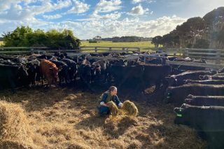 Gandería Gado, máis de 2.000 cabezas de gando en Australia alimentadas 100% con pasto