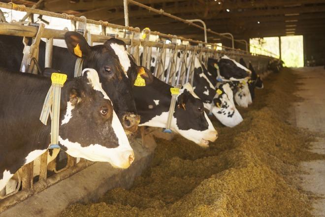 Vacas da Casa Fernando