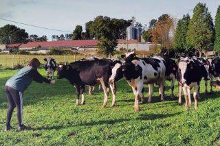 As vacas que liderarán o cambio