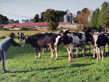 Curso sobre mellora dos rendementos do gando vacún en ecolóxico a través da alimentación