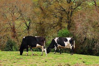 Cursos sobre pastoreo e alimentación do gando