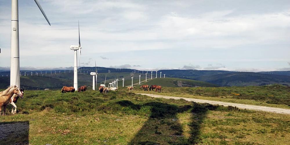 Na Serra do Xistral os cabalos axudan a manter limpo o monte no que foron instalados os muíños de vento