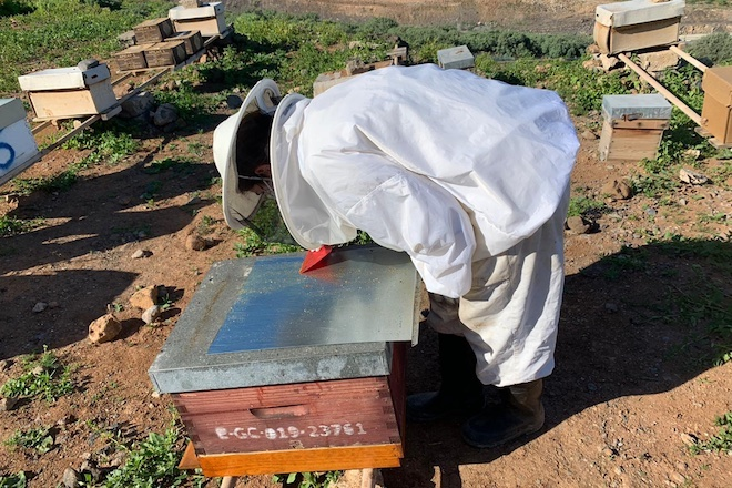 Novas alternativas para combater a varroa no apiario