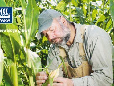 Yara Mila Actyva: O abonado idóneo para un bo desenvolvemento do millo