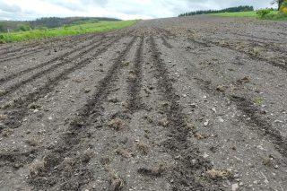 Os danos do xabarín no agro derivan nunha campaña de denuncias no xulgado
