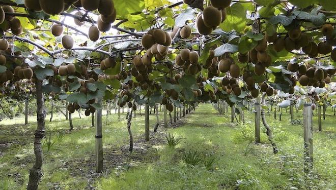 Xornada formativa sobre as oportunidades de negocio do cultivo do kiwi en Galicia