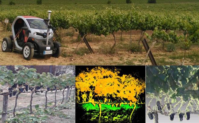 Terras Gauda participa nun proxecto europeo para robotizar parte dos traballos na viña