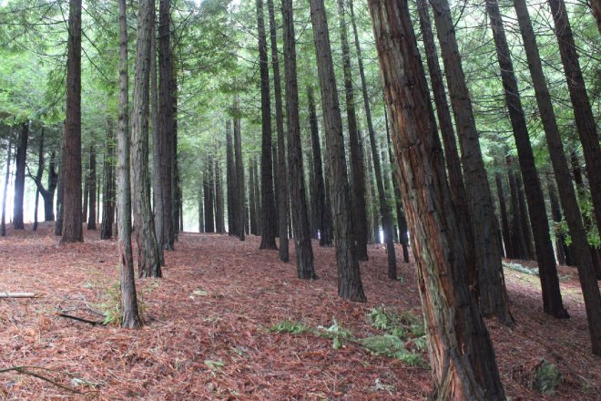 sequoia-cif