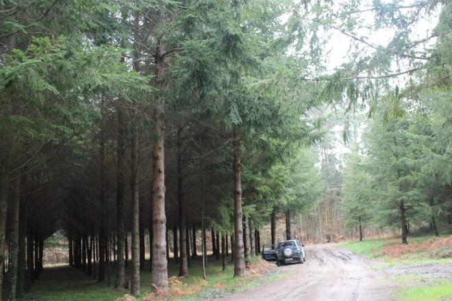 Lourizán consolida sus bancos de clones de secuoyas y pino de Oregón, coníferas que ve de interés en Galicia