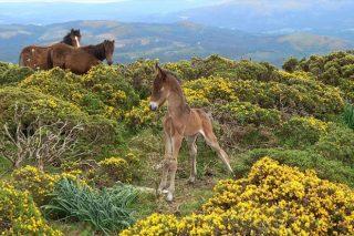 Actividade de sensibilización ambiental sobre as bestas en Sabucedo