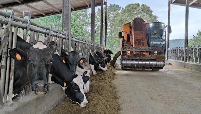 O servizo de carro de Cobideza vailles tódolos días para a ración das vacas en produción e cada dous días para as vacas secas.