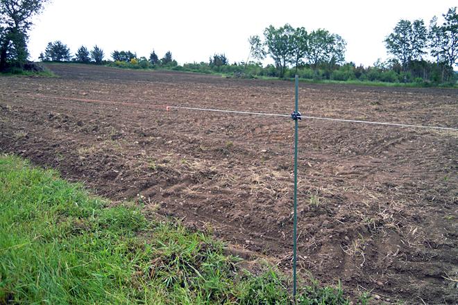 Terra labrada a millo, ao que este ano adicaron unhas 18 hectáreas