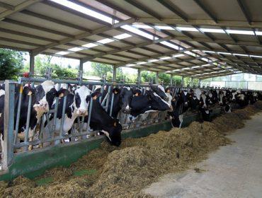 O estudo do Ministerio sitúa os custos de produción de leite en 0,35 euros o litro