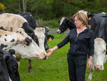 """""""Para que as vacas dean bo leite, hai que tratalas con agarimo"""""""