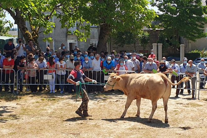 Vendida unha xovenca de rubia galega por 3.950 euros na poxa de Adai