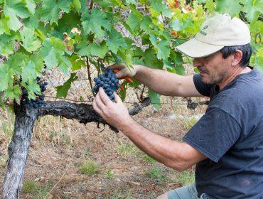 Os viños da ribeira do Navia avanzan un chanzo máis no seu recoñecemento oficial